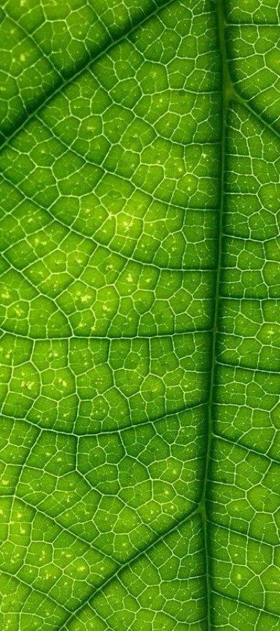 leaf-green-macro-1209927-e1597938036516